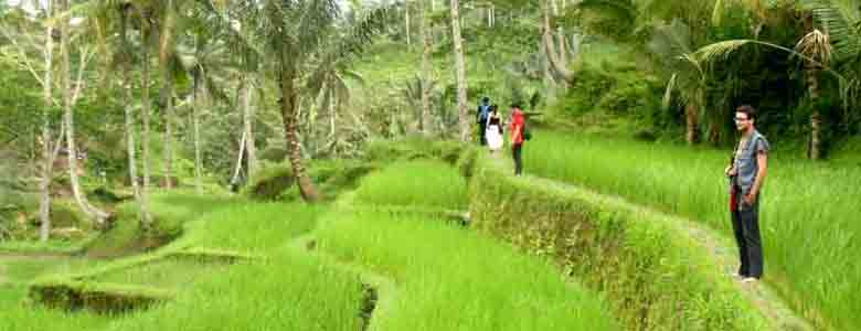 rice-paddy-walk