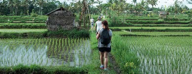 rice-paddy-walk2